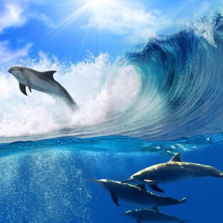 Fotomural Delfines 188 VE