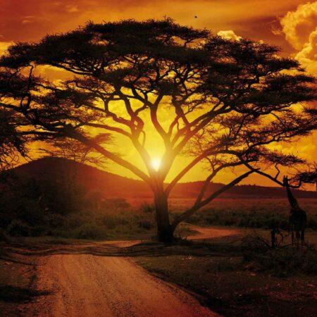 Fotomural Atardecer en África 055 VE