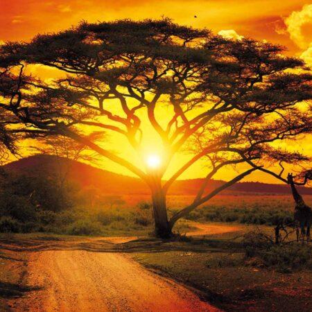 Fotomural Puesta de Sol Africana 400 VE