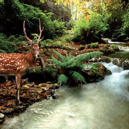 Fotomural Ciervo en el Bosque 147 VE