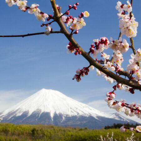 Fotomural Monte Fuji 8-006 VE